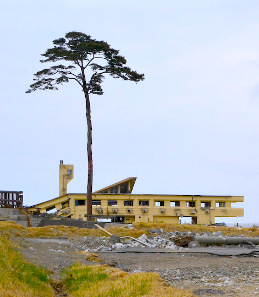 The collapsed Rikuzentakata Youth Hostel and the Miracle Pine Tree, the sole survivor of about 70,000 pine trees in Rikuzentakata, Iwate, after the 2011 East Japan Great Earthquake and its tsunami. Photograph: Jacob Ehnmark / https://creativecommons.org/licenses/by/2.0/deed.en.