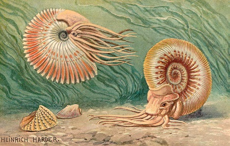 Historic reconstruction of ammonites by Heinrich Harder (1858-1935).