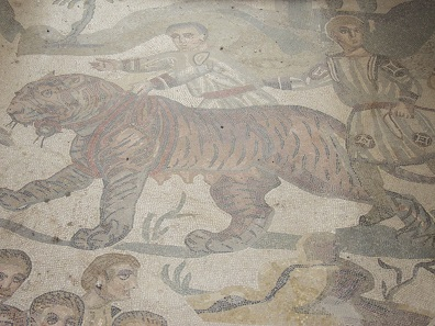 An Indian tiger being captured to be killed in some animal fight for the entertainment of the Romans. Mosaic from the Villa Casale / Sicily. Photo: KW.
